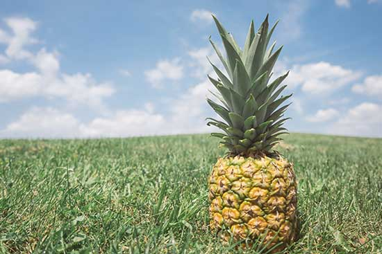 Pineapples in demand globally