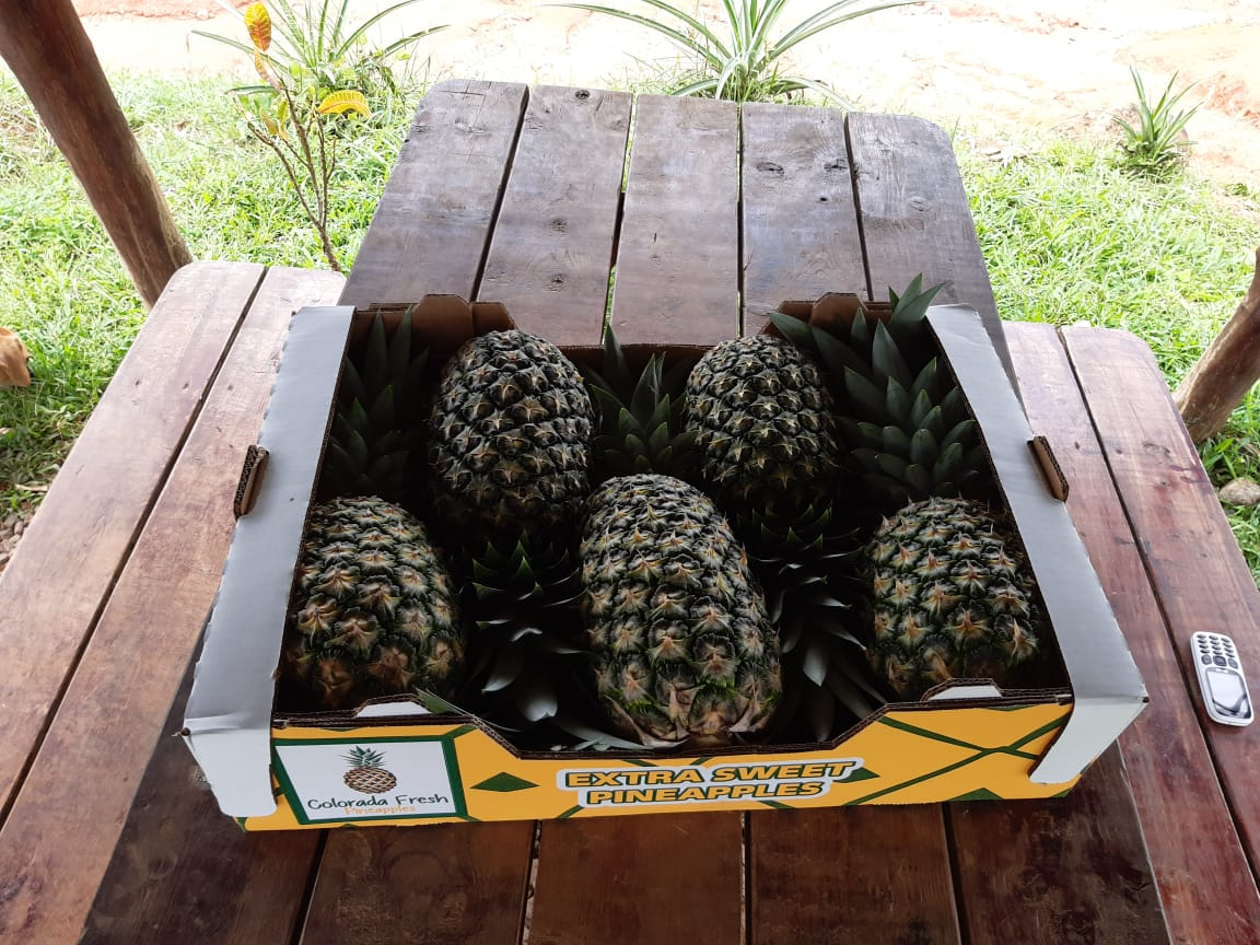 Colorada Fresh Pineapples Boxes