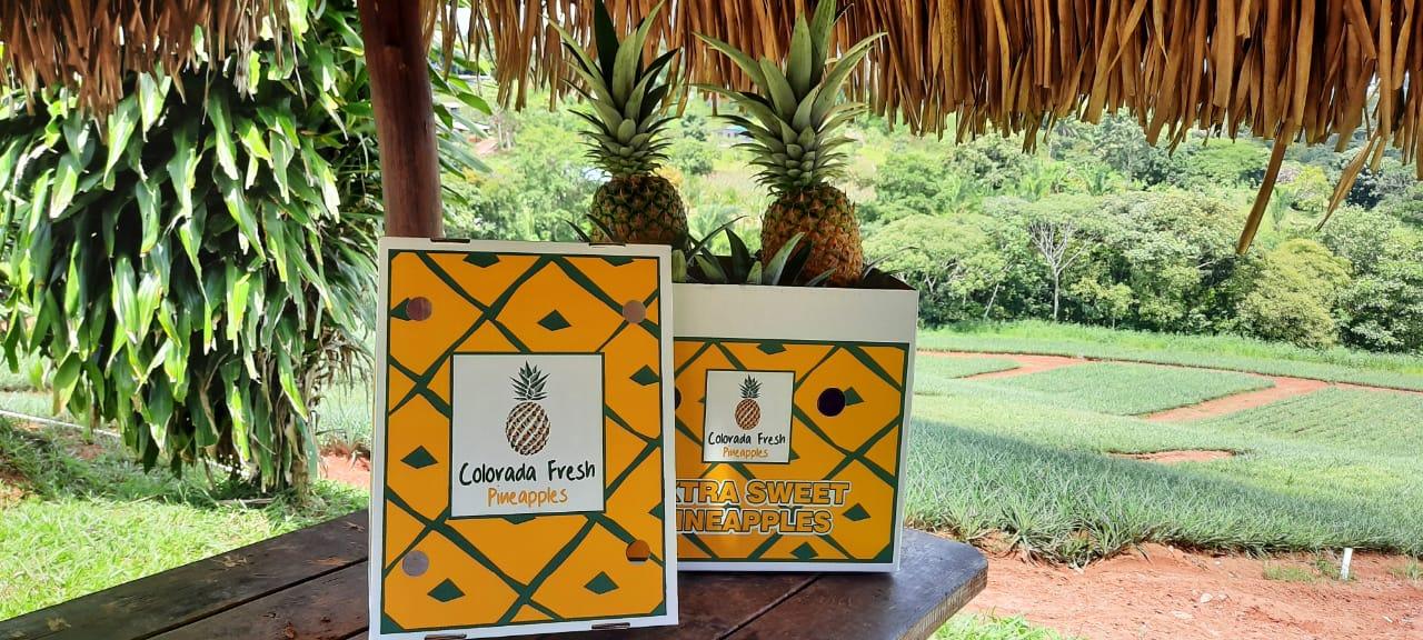 Colorada Fresh Air Shipping Boxes