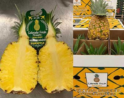sweet md2 Colorada Fresh Pineapples Panama